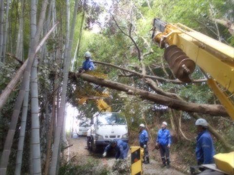 熊本エリア 倒木の伐採・撤去工事